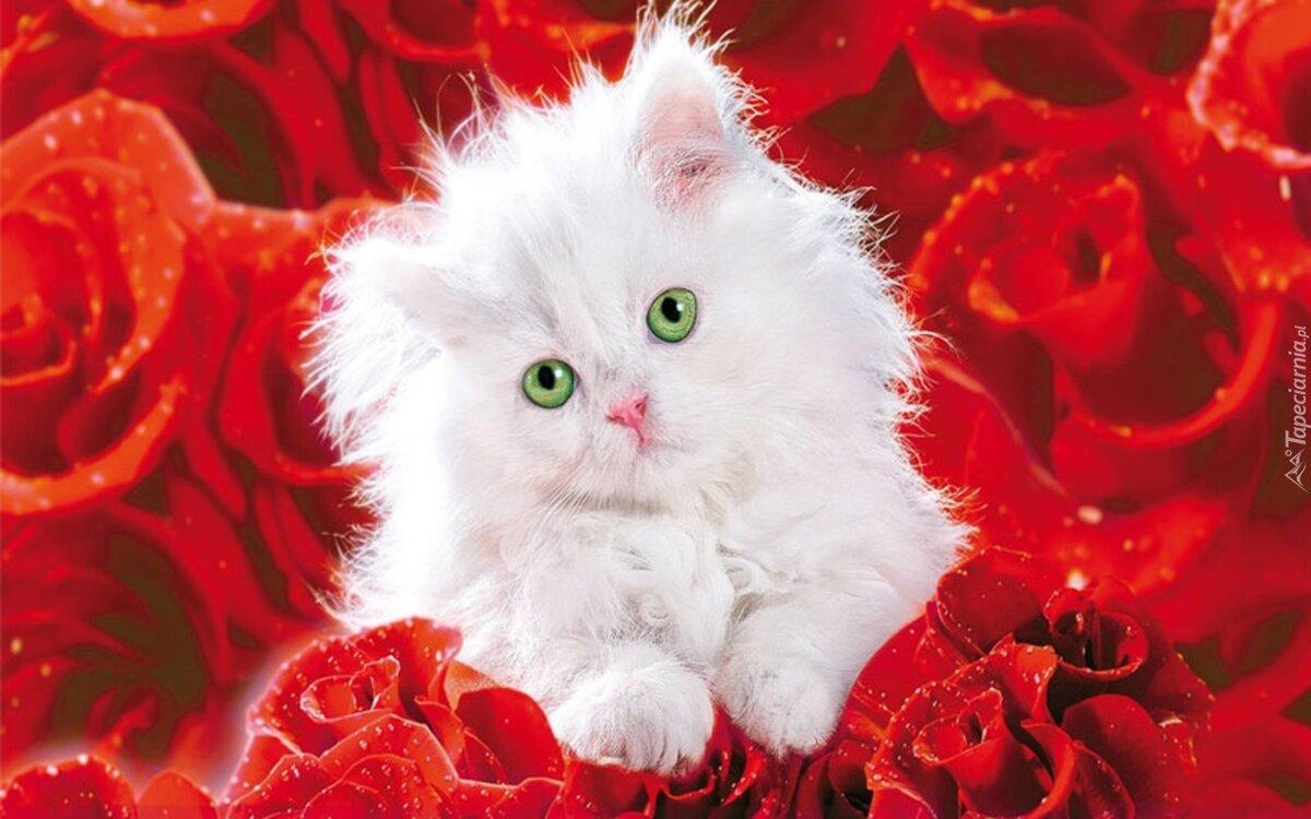 слов котята с рождения картинки отечественный