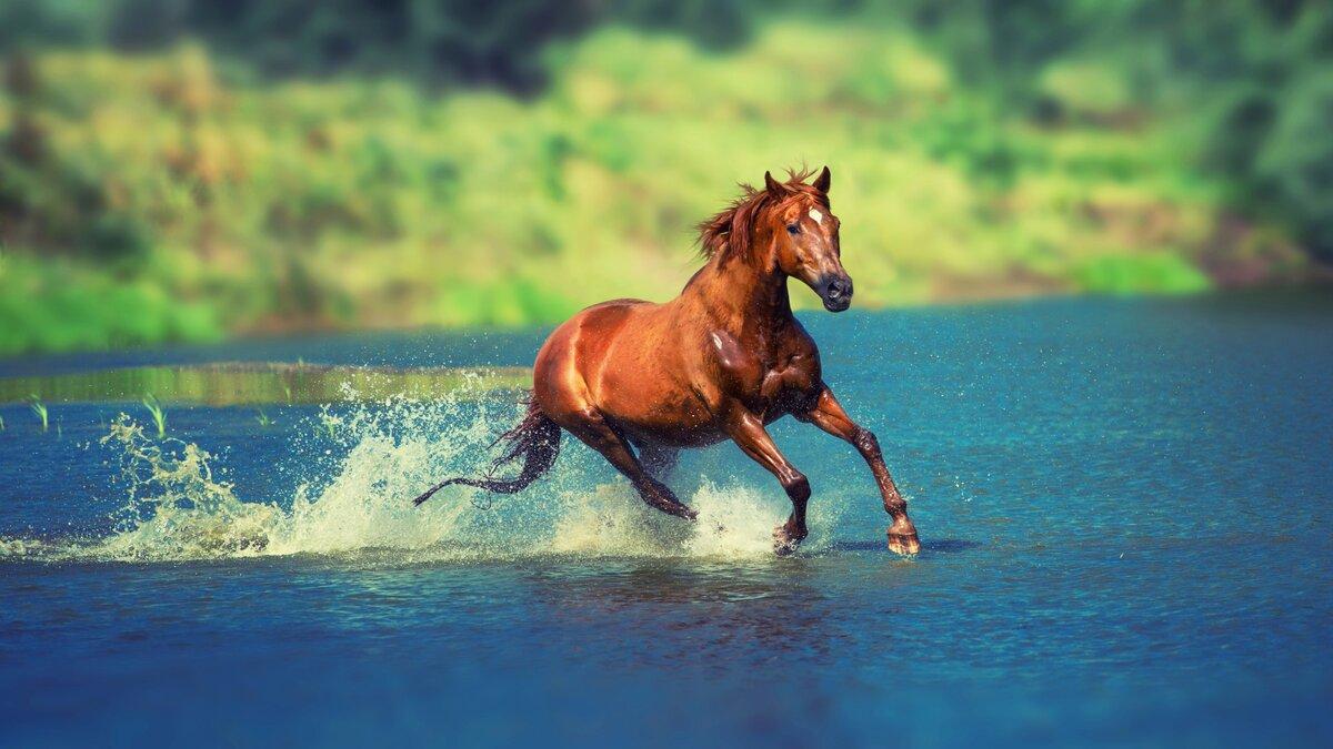 бегать как лошадь картинки царицыно