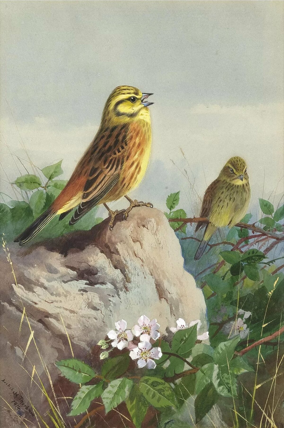картинки с образом птиц решила