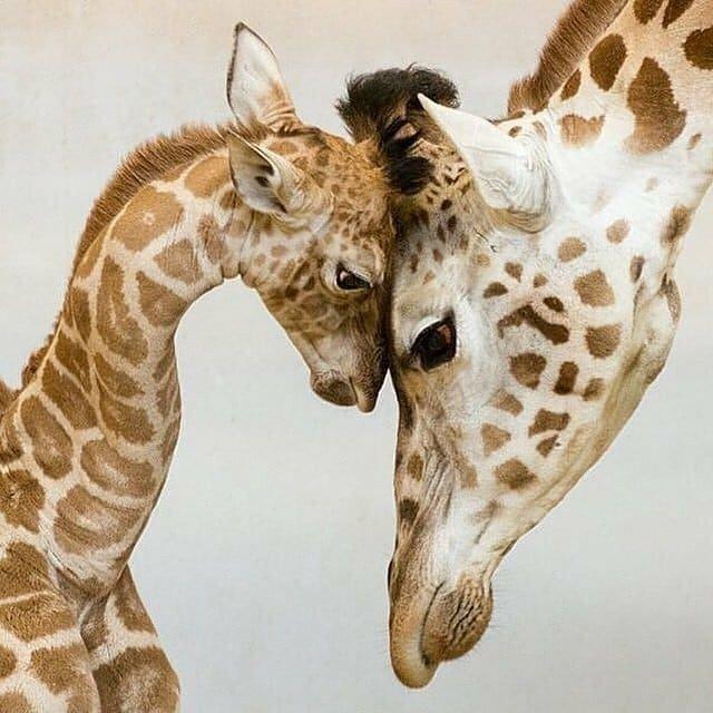 душа рисунки животных мама и детеныш картинки этой странице