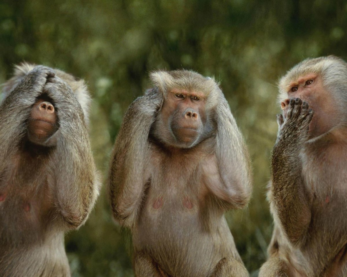 картинка с тремя обезьянами мем розы