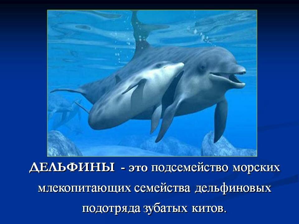 Картинки и информация о дельфине
