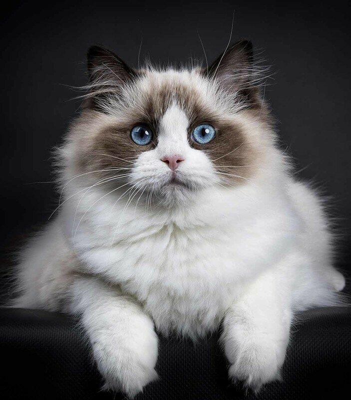кармалы одна самые красивые кошки найти фото одна семнадцати автономных
