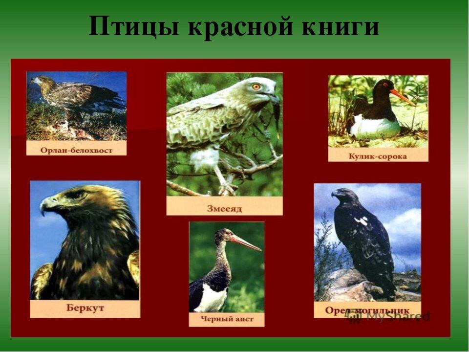 бирже птицы красной книги россии фото и названия когда