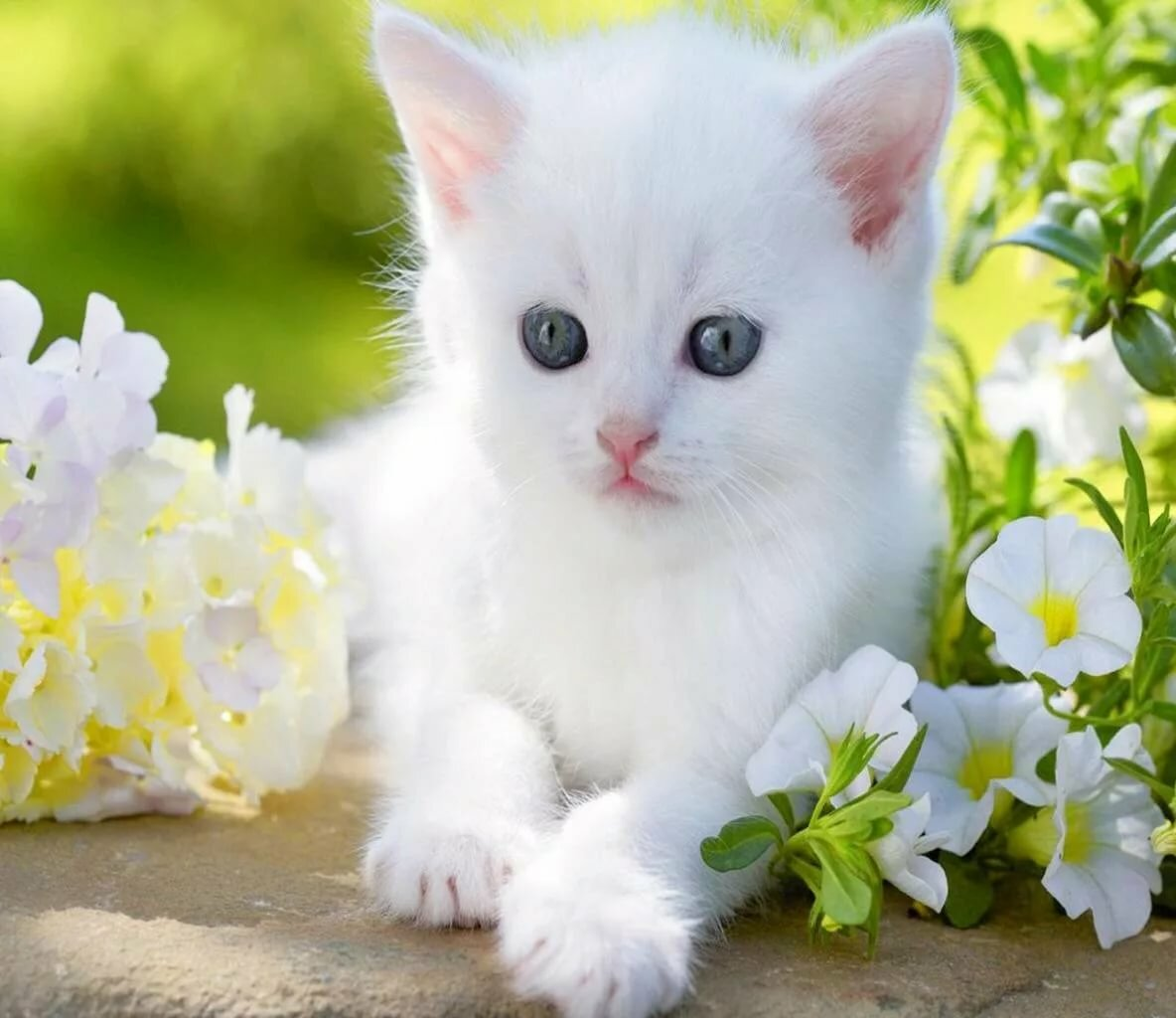 Загрузить картинки котята