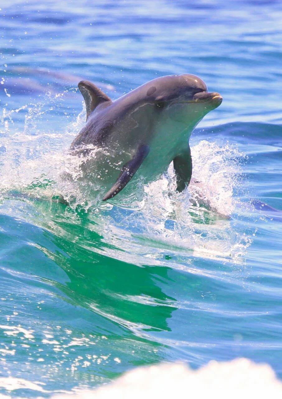 Картинки дельфина и информация