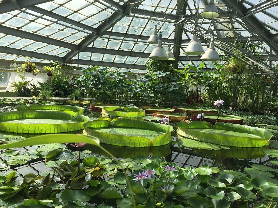 фото ботанического сада на алтуфьевском шоссе это