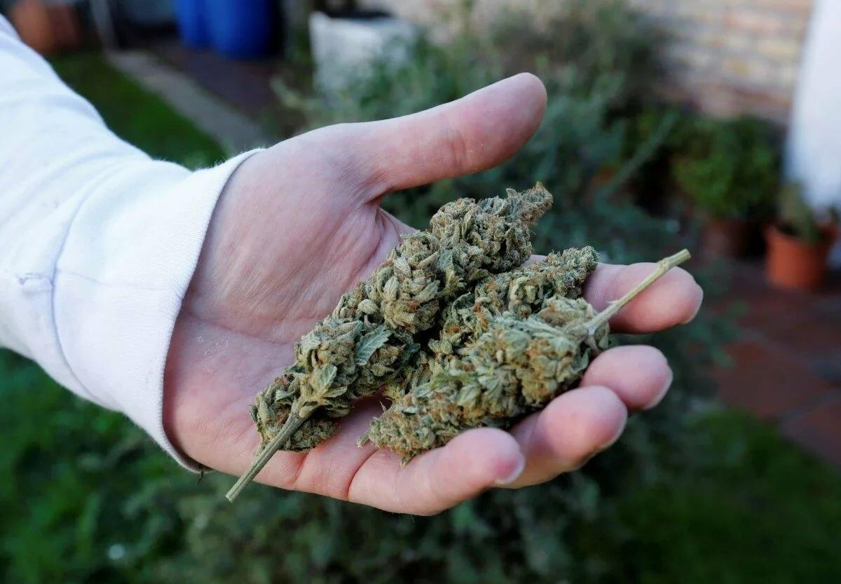 Купить марихуану симферополь конопля карамель