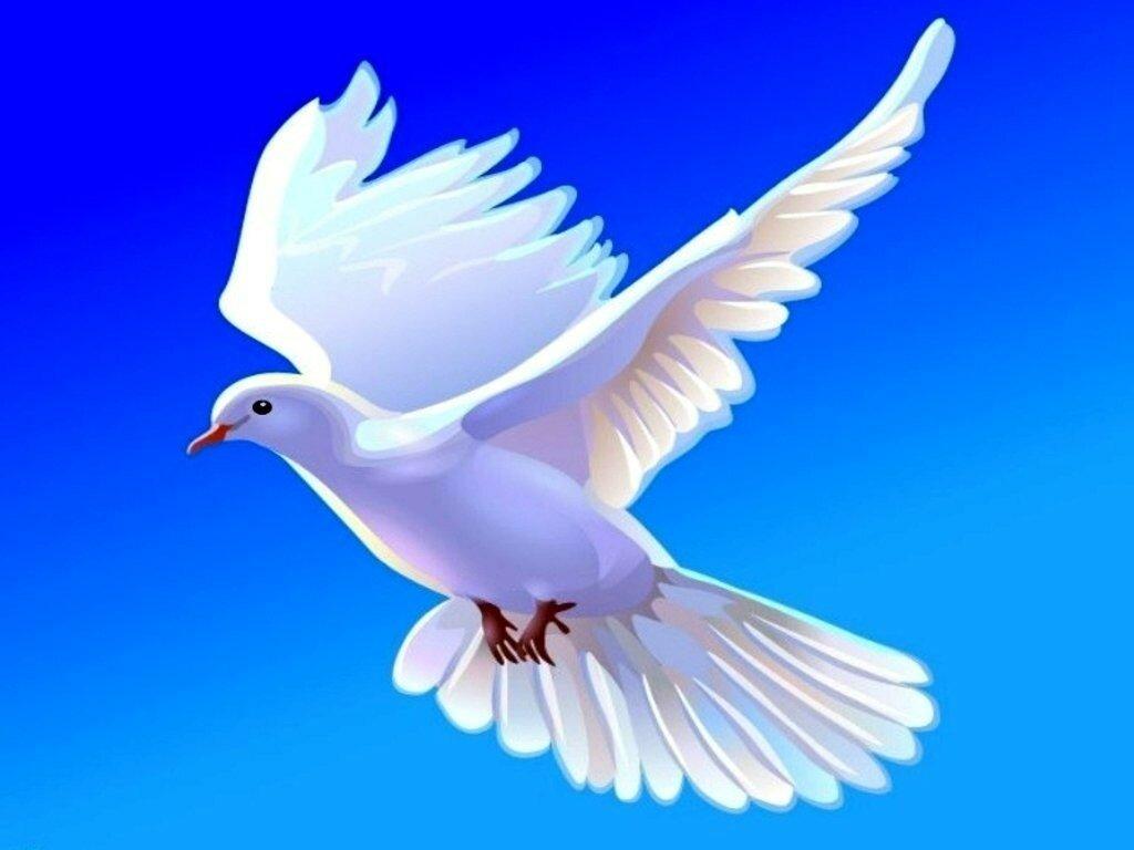 Картинка голубь мира