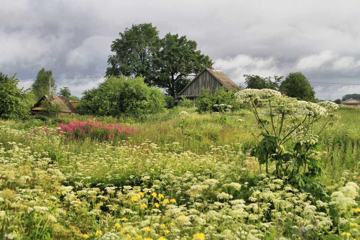 Деревня лето картинки