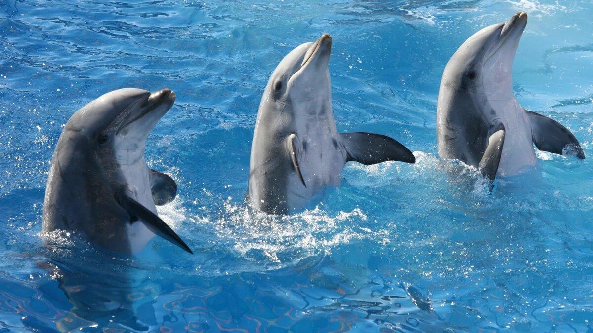 комплекте картинки дельфинов на весь экран кухне