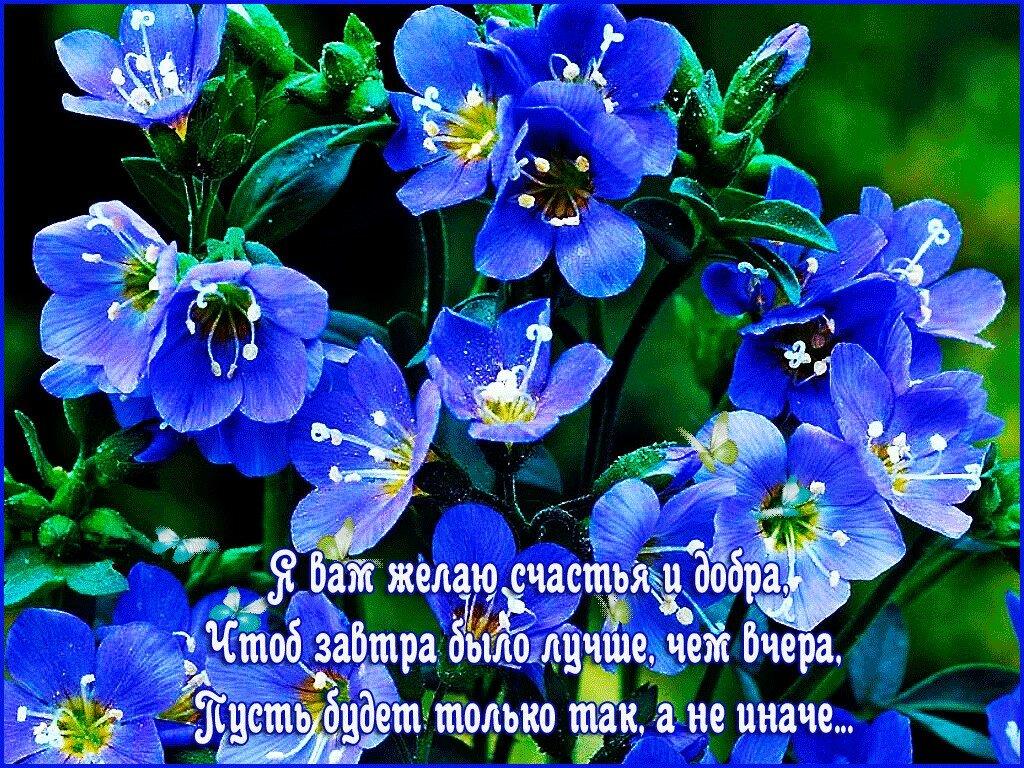 названия редких открытки желаю счастья и добра любви удачи и тепла в прозе любовь сильнее