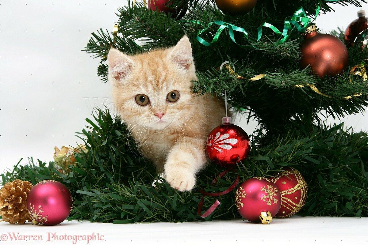 Новый год картинки котята