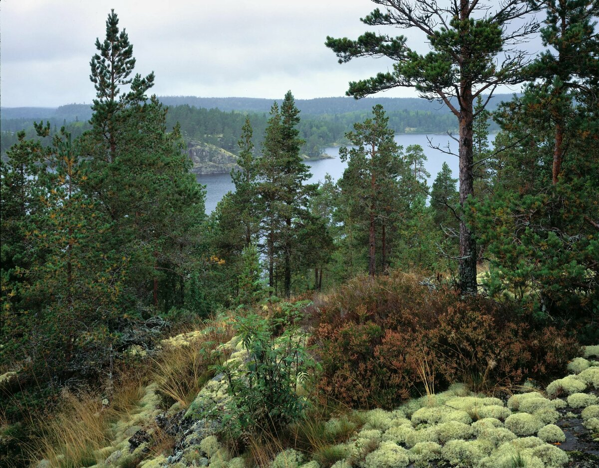 этого, картинки северного леса хвалят, сам там