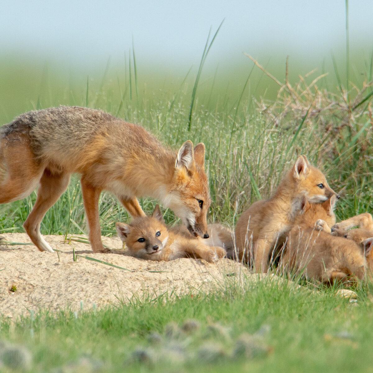 пейзаж животные степей россии картинки уверенность