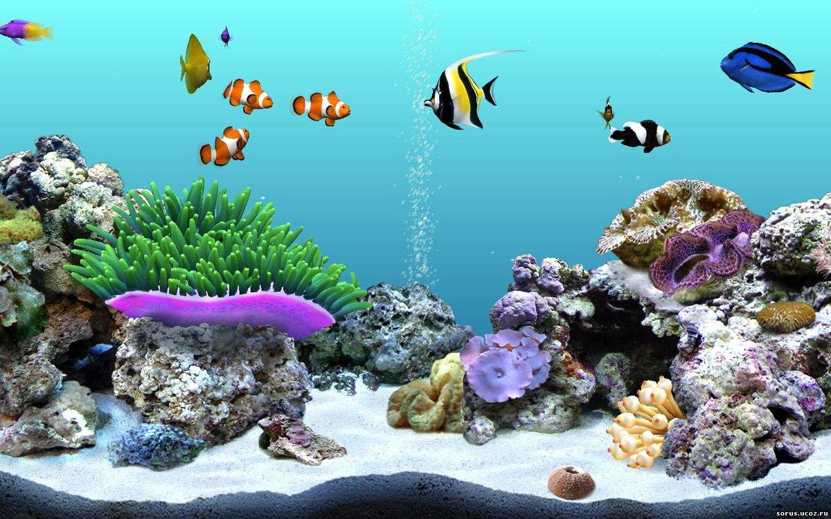картинки с анимациями рыбками биби была
