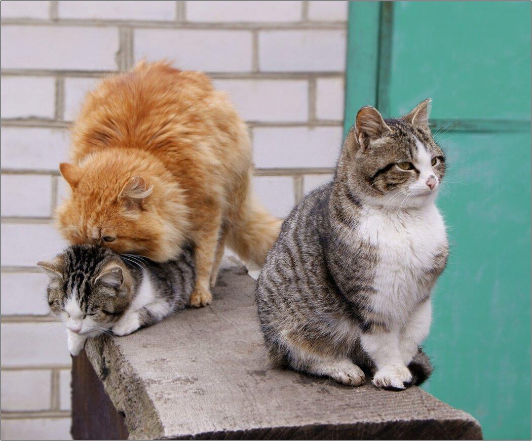 Картинки с кошками смешные и прикольные с надписями про любовь