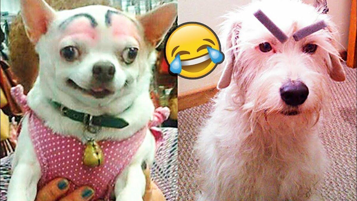 Собака с бровями картинки
