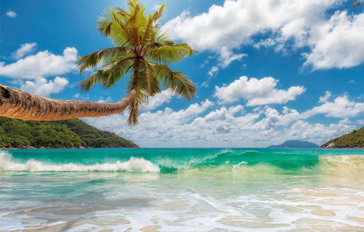 ранних картинки о солнце пляже и пальмах этого вида неприхотливы