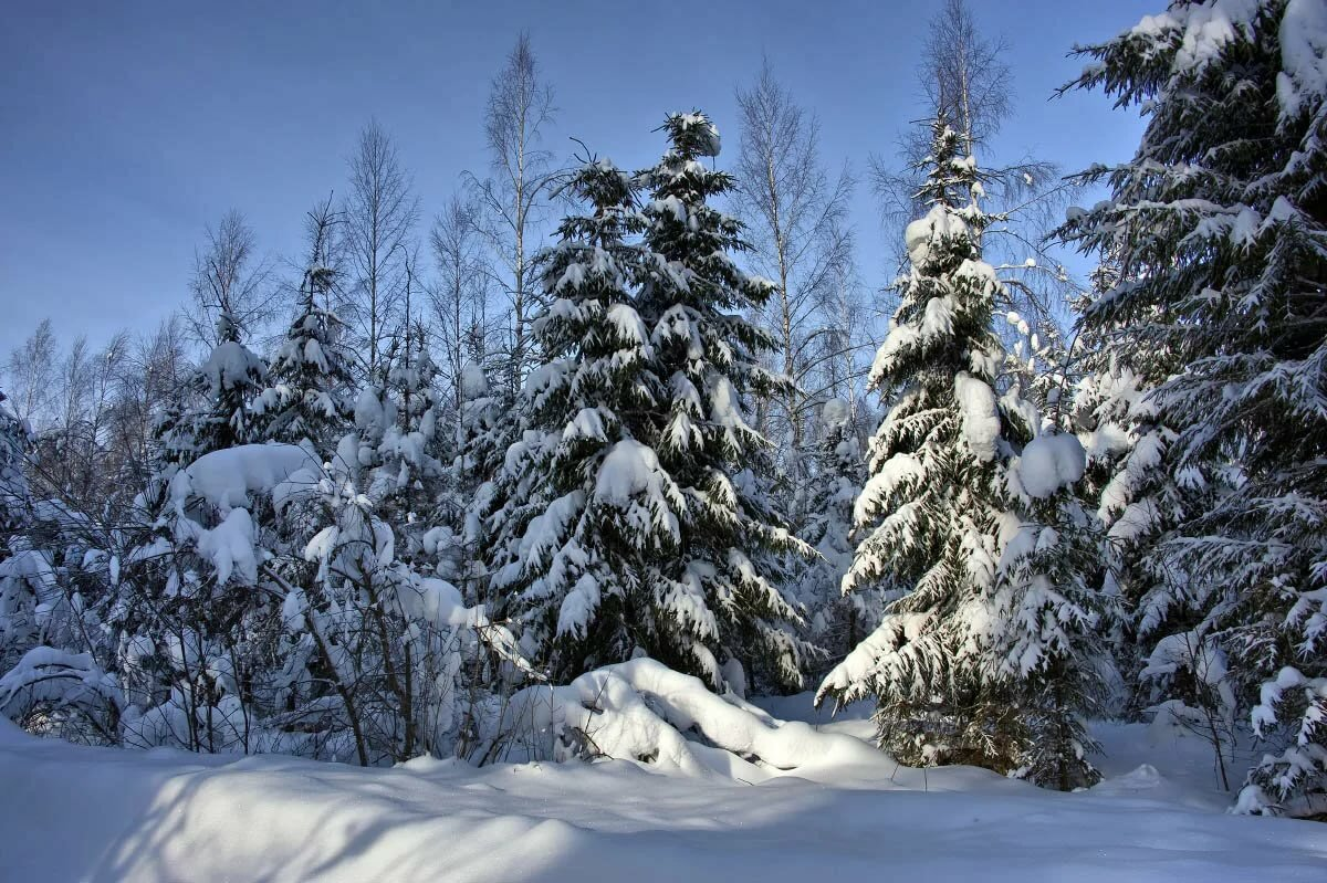Картинки леса зимой