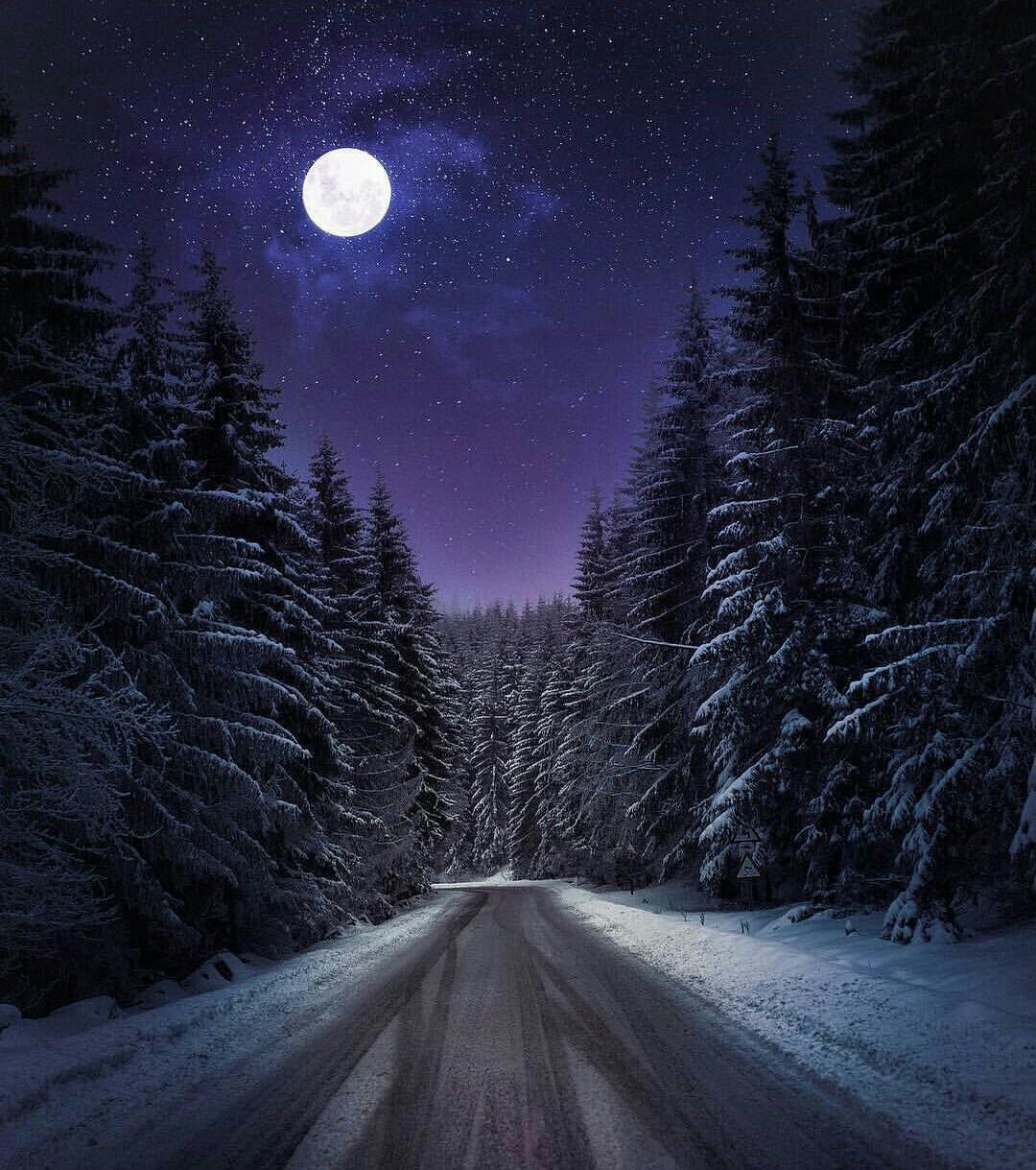 лунная зимняя ночь картинки орхидеей, которой