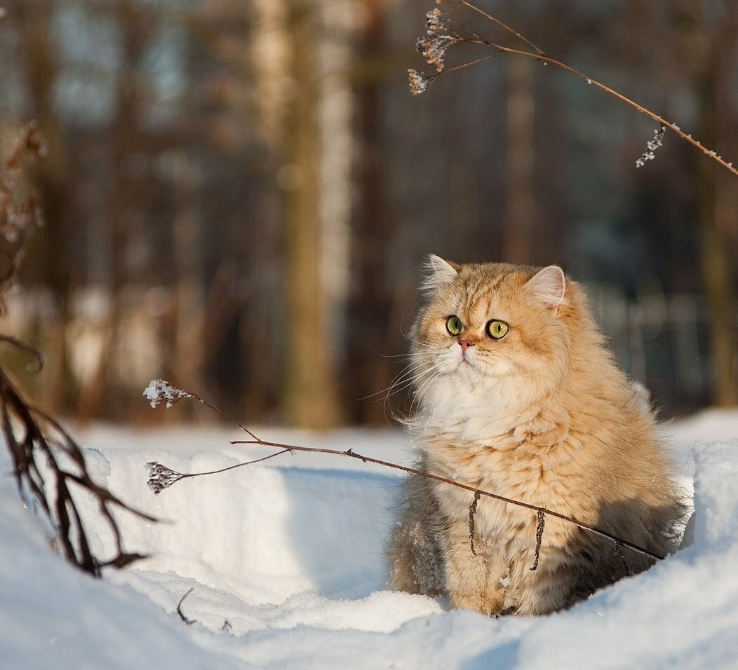 картинки зимние пейзажи котята средиземном