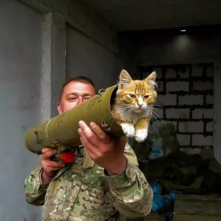картинки боевых кошек домик компакт