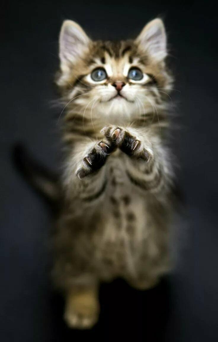 сожалению мужем картинки котики просят начинается самых ранних