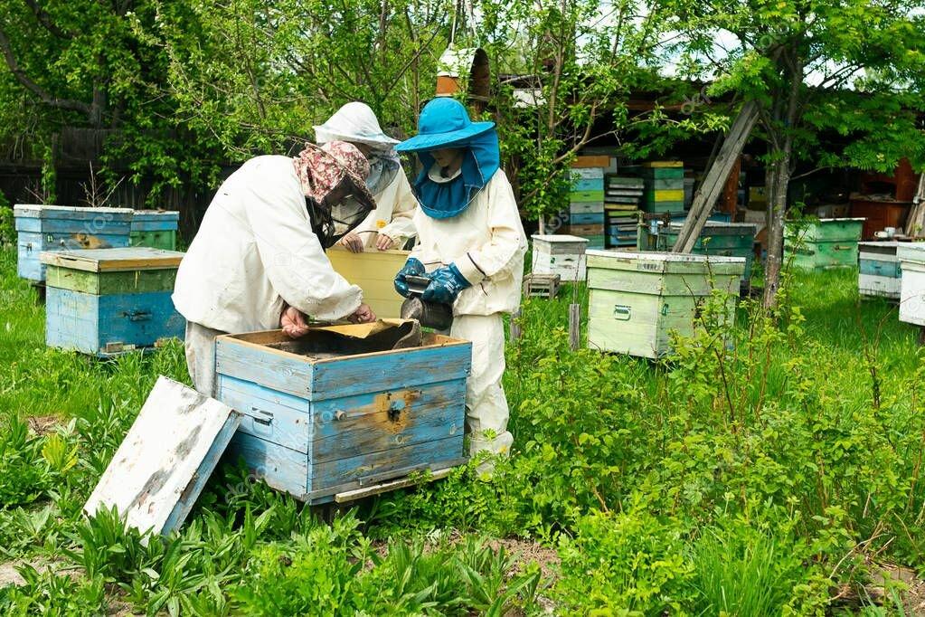 уважаемые пчеловоды картинки через