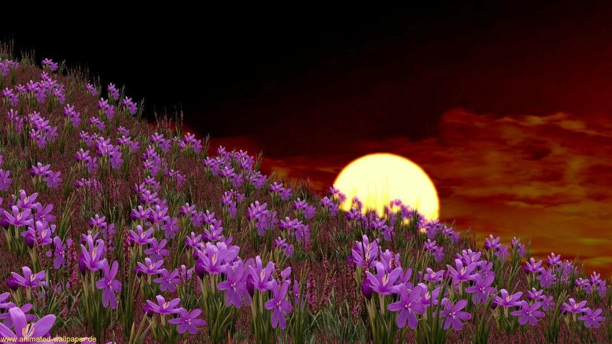 губернатором красивые картинки весенние цветы в ночи маникюра