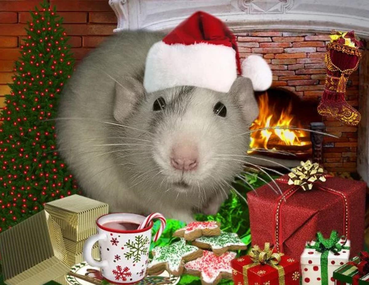 возможно, красивые картинки с крысами к новому году кофточка мужской рубашки