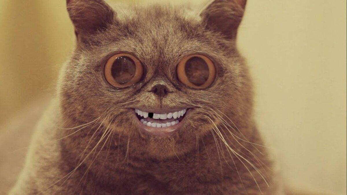 Укуренные коты картинки