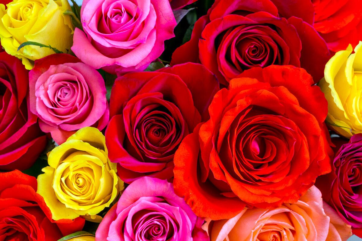 Картинка красивые розовые цветы