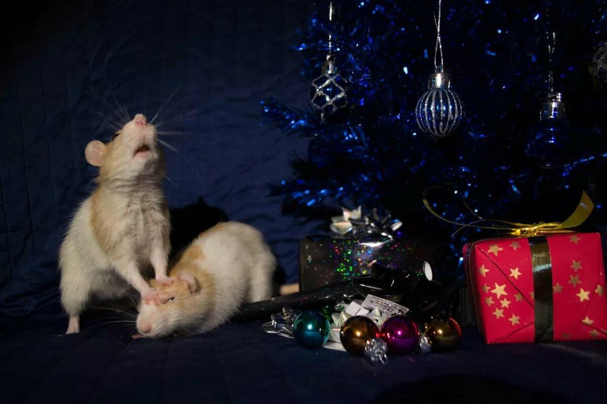 картинки новогодних мышей и крыс компьютерные
