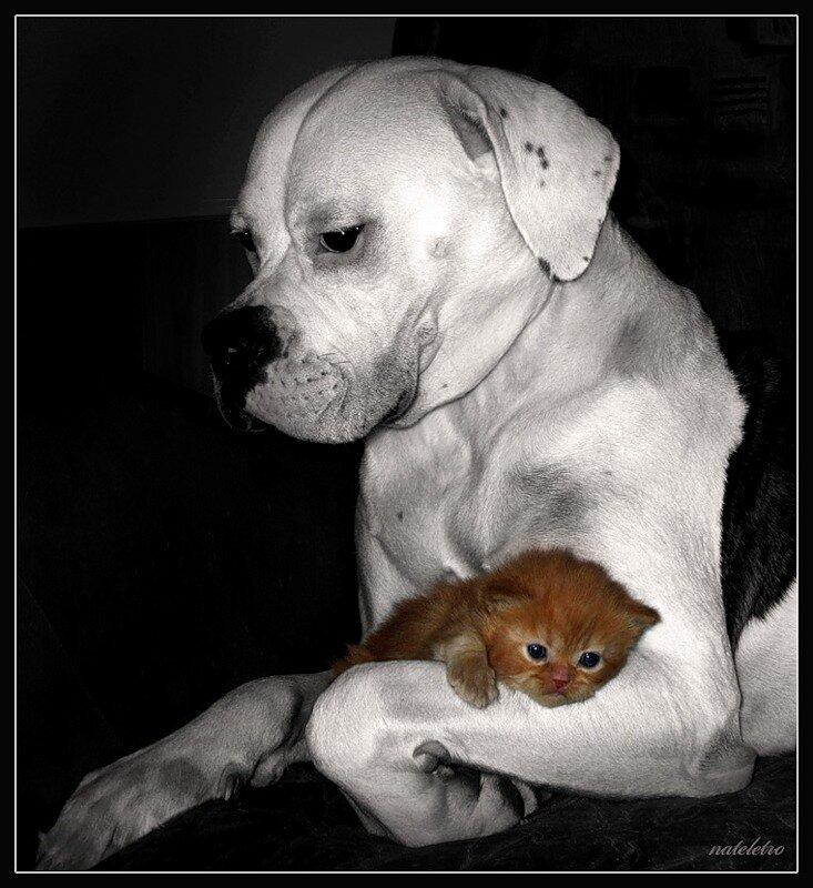 Стихи о животных смешные картинки