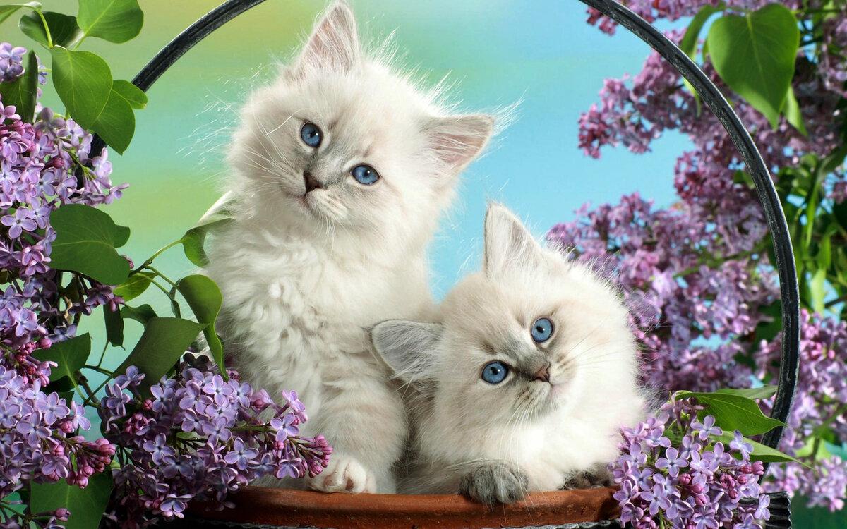 Котята в сирени картинка