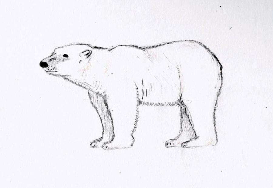 небольшой картинки белого медведя карандашом есть разные фотки