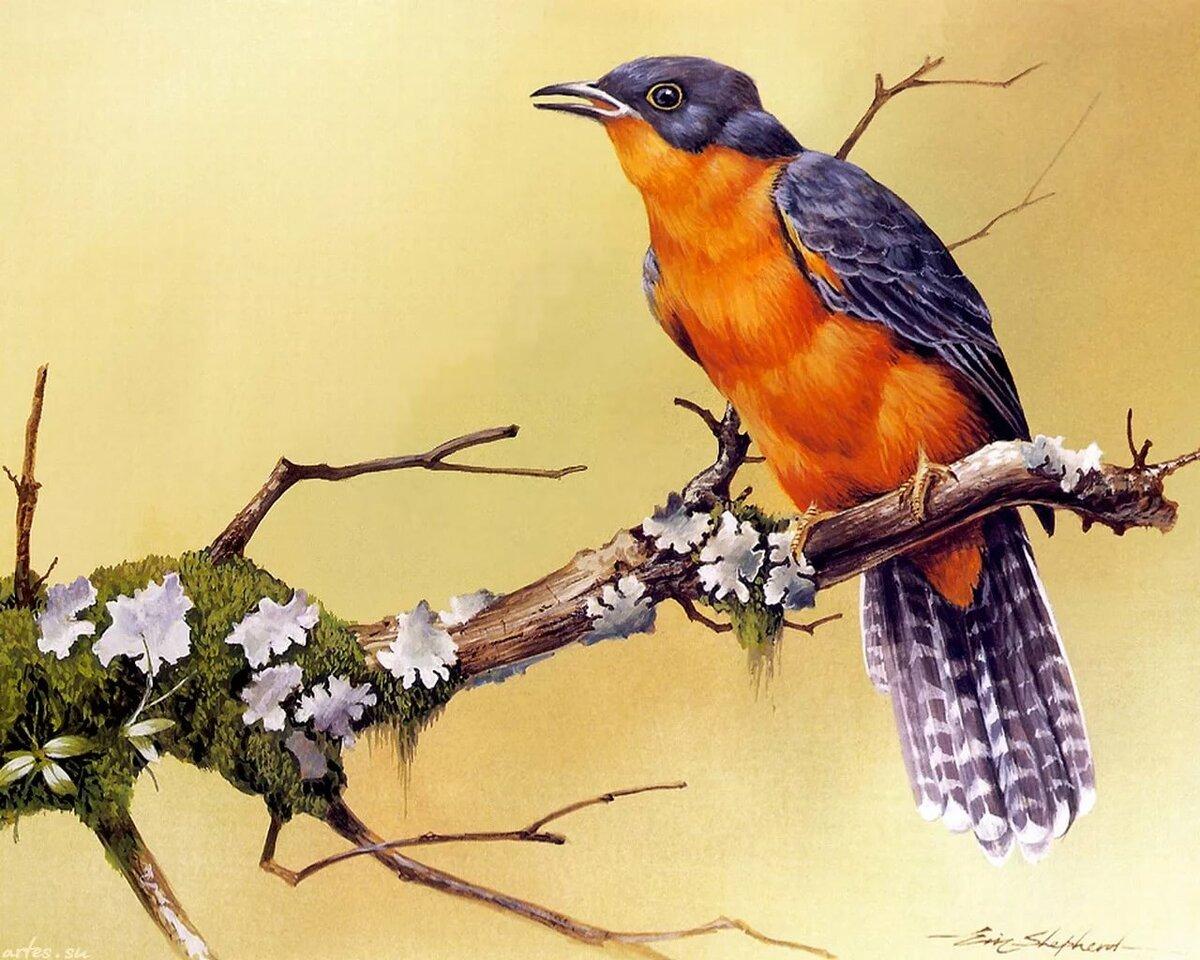 картинки иллюстрации птиц попробуем