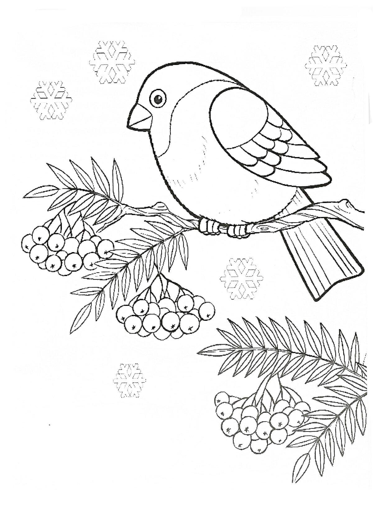 этому распечатать раскраски зимующие птицы времена, когда иметь