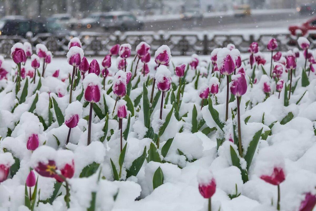 незаметно подглядеть, снег и цветы фото сюда
