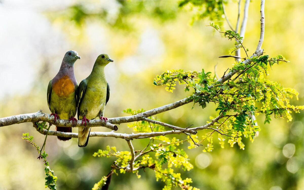 Картинка природа птицы