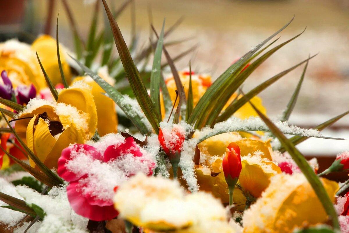 Цветы под снегом картинки на рабочий стол