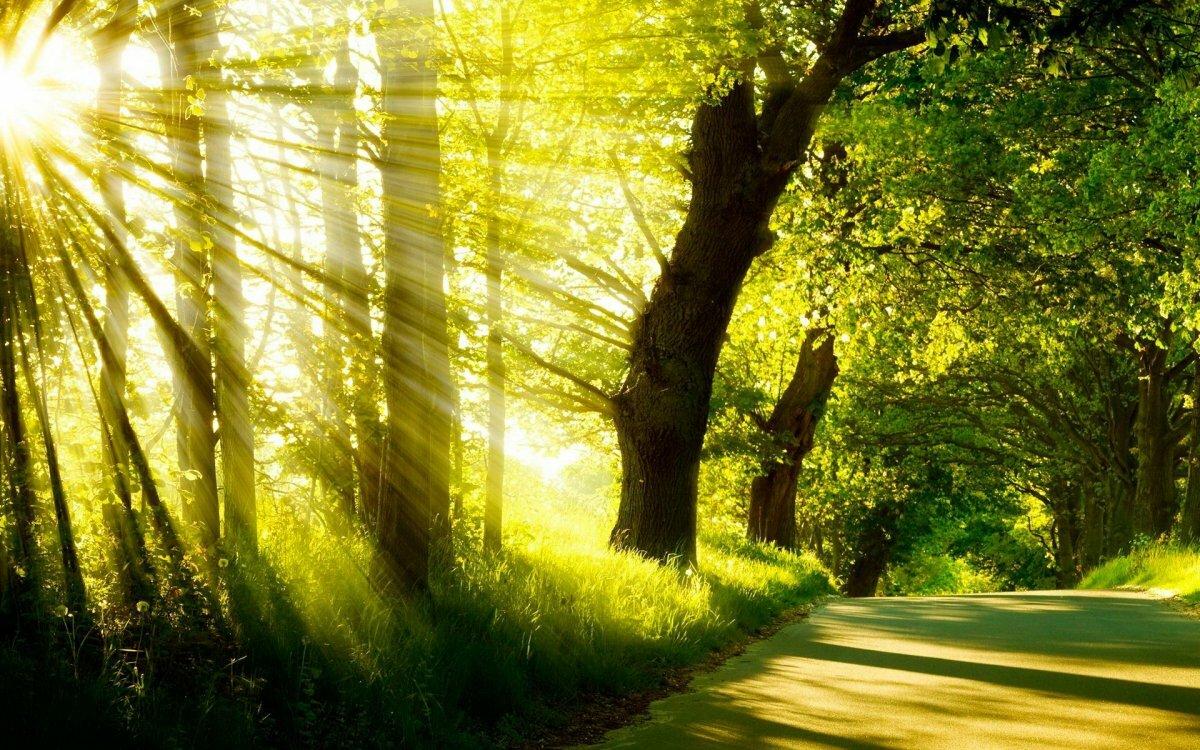 солнечное лето лес картинки реальных условиях эти