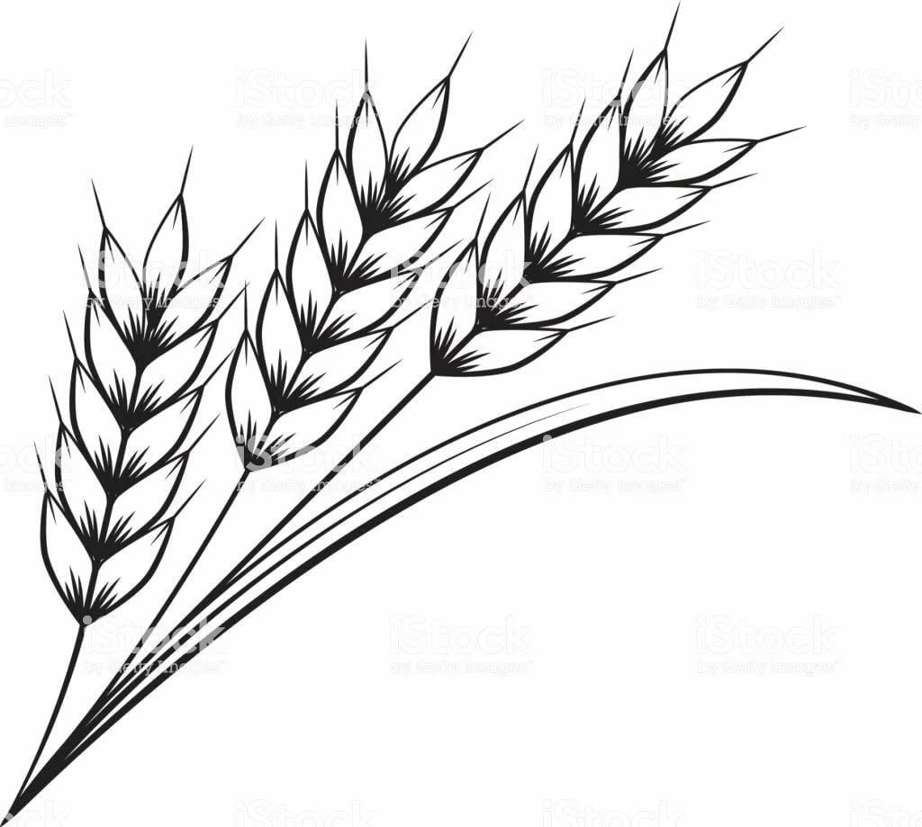 Венок пшеницы картинки увидеть
