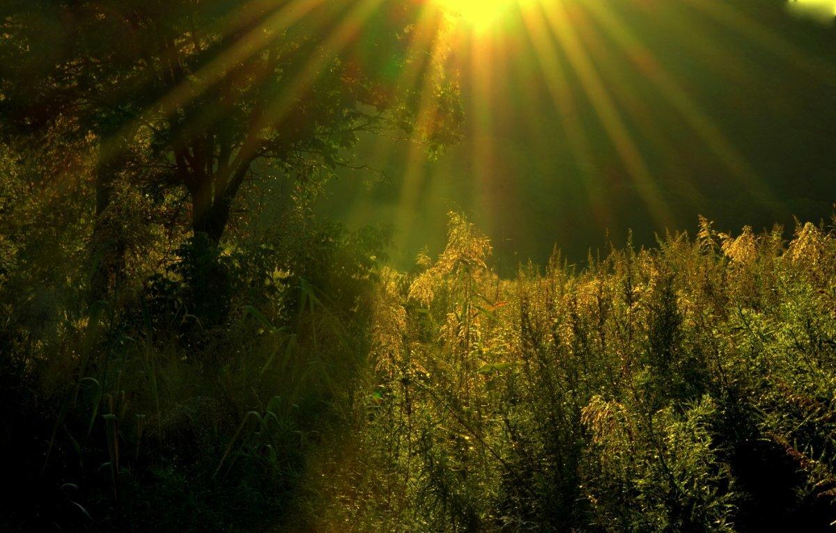 красивые картинки солнечного света доме главные лишь
