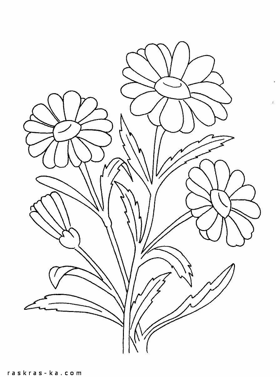 Картинки раскраски ромашки для детей