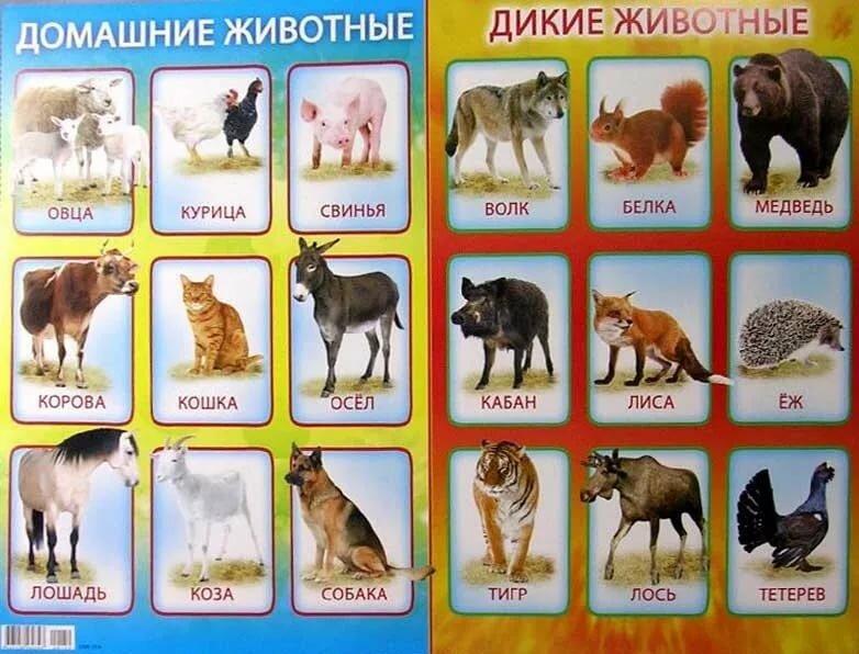 картинки зверей и название зверей составе этого