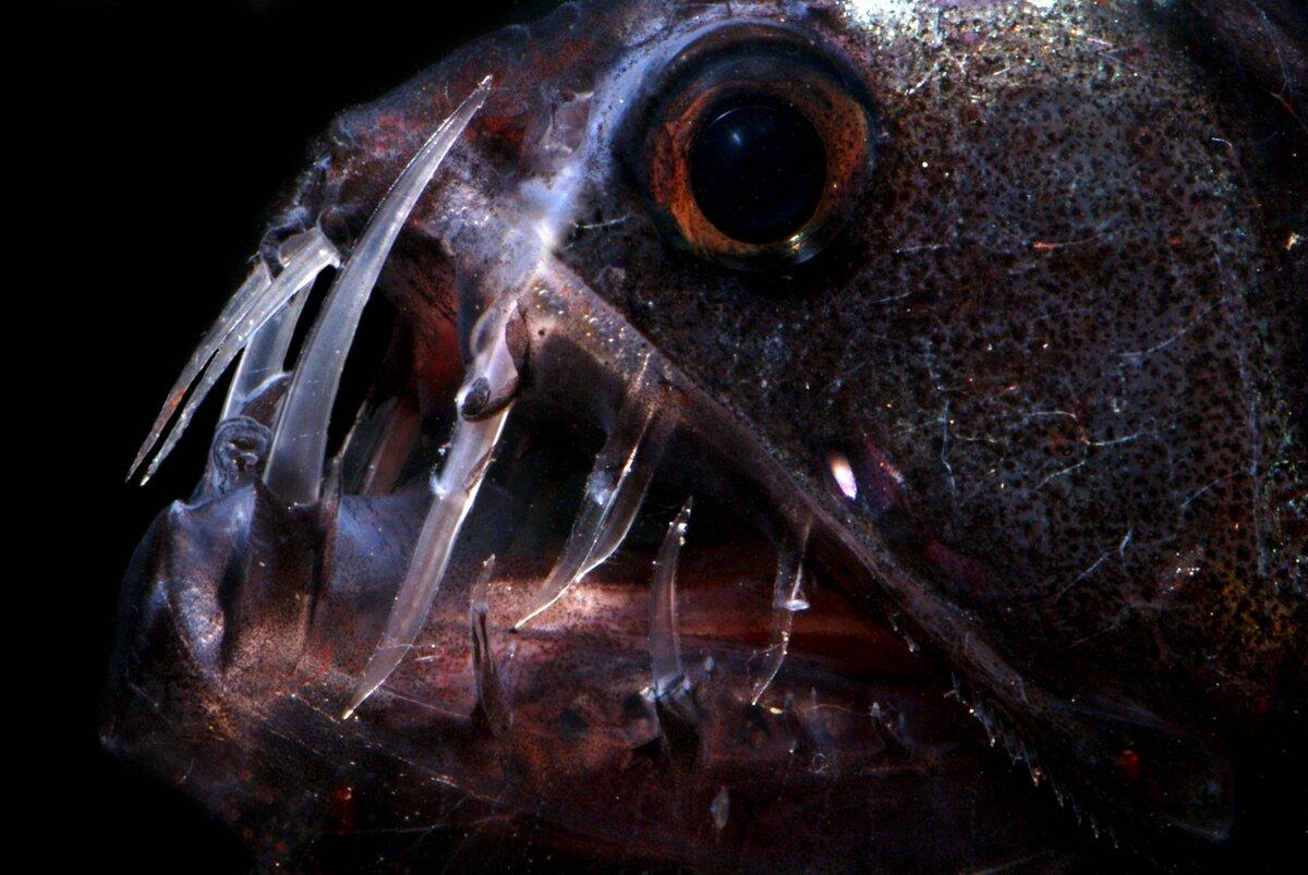 обитатели глубин океана фото его