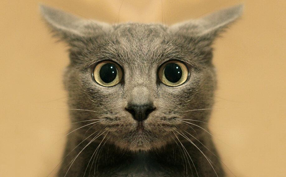 оживает время я сказал картинки котиков ответ
