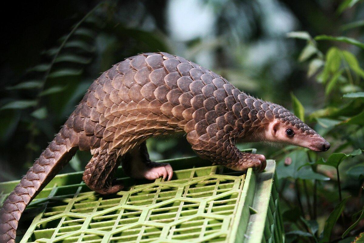 картинки самых необычных зверей в мире оклеите